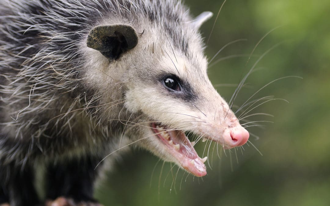 Google Possum Update penalizes businesses that share office space